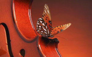 violin-butterfly-landing-on-a-250828